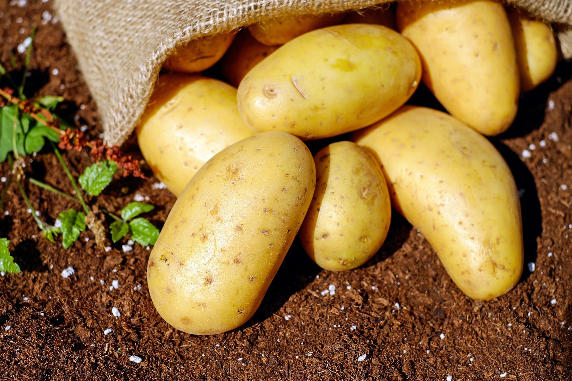 Картофель сбавил в цене 31,8%