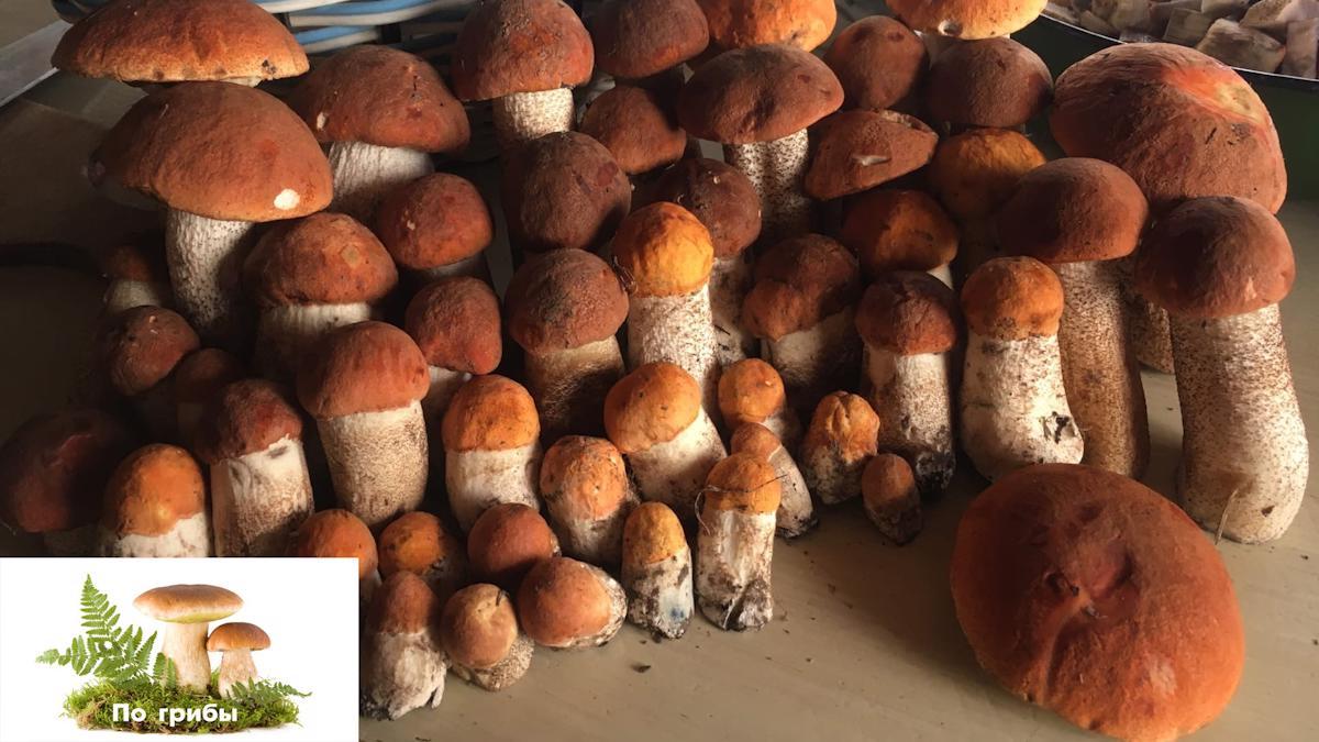 Отправляемся #По грибы