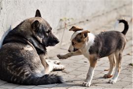 В Череповце больше тысячи кошек и собак находятся на попечении волонтеров в приютах