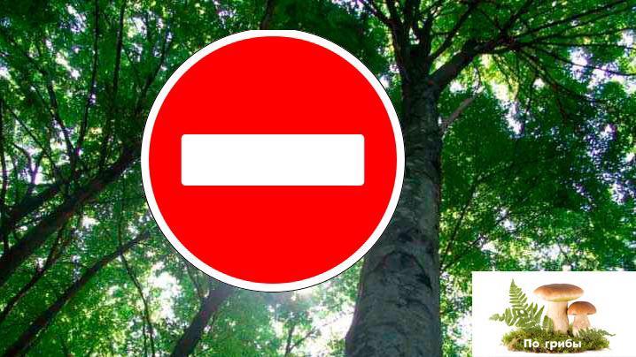 Чего не стоит делать в лесу?