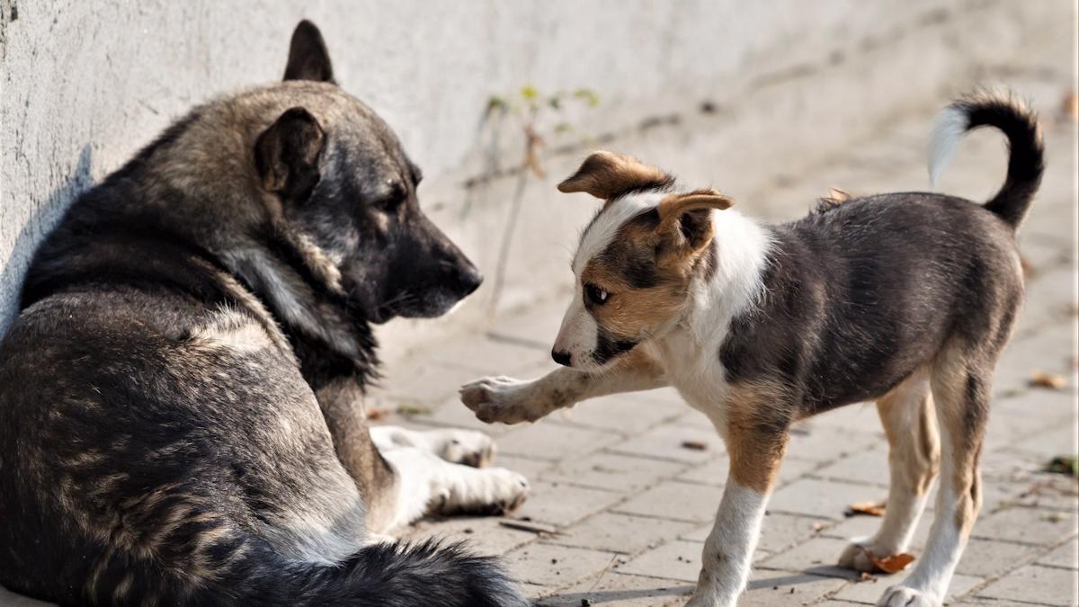 Акция по сбору помощи приютам для бездомных животных завершается сегодня