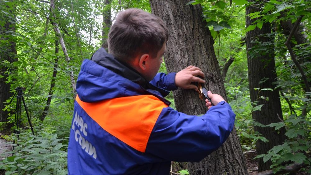 Семья из Вологодского района накануне заблудилась в лесу недалеко от деревни Норобово