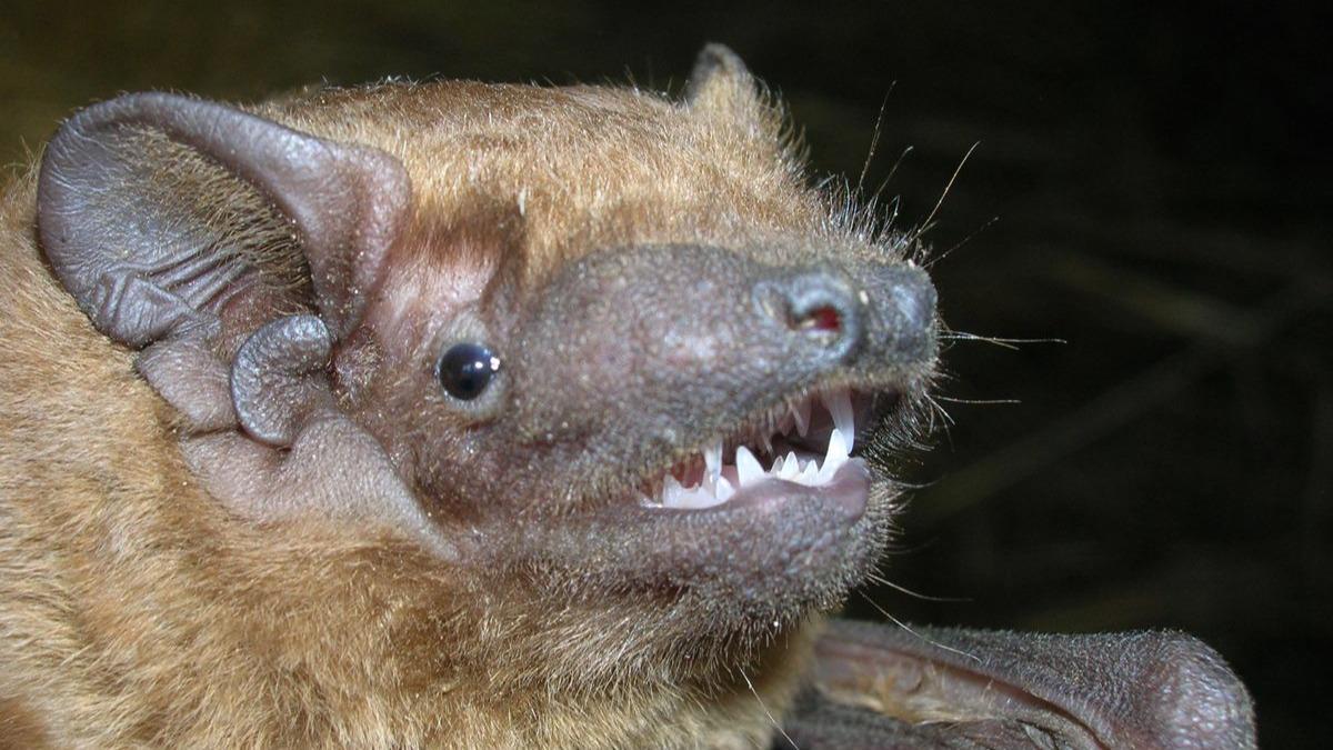 Ночь летучих мышей отмечают в эти выходные