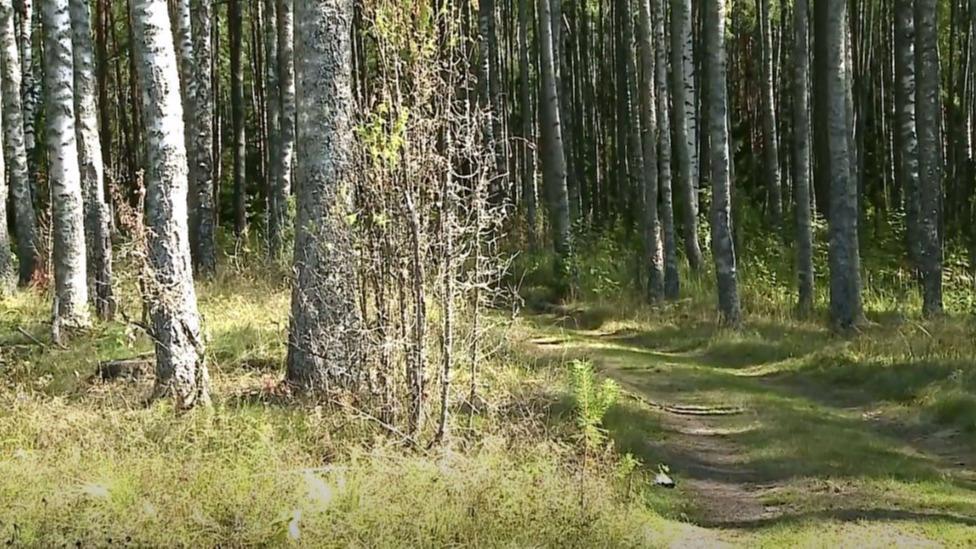 Увидеть медвежьи следы, прогуляться по кабаньей тропе, стать исследователями смогут посетители Дарвинского заповедника