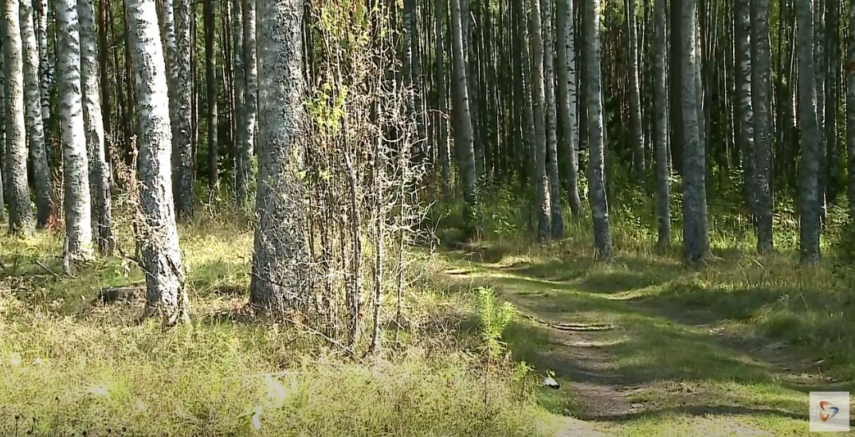 Увидеть медвежьи следы, прогуляться по кабаньей тропе смогут вологжане