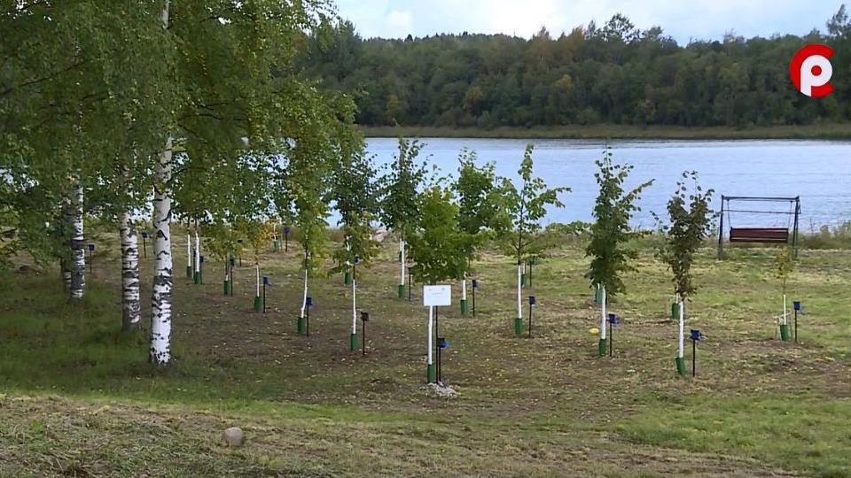 Парк памяти появится в селе Ферапонтово Кирилловского района