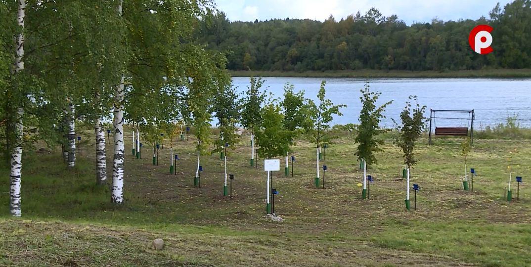 Участие в высадке деревьев принимали десятки людей