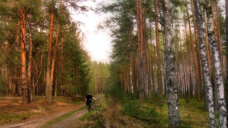 Как не потеряться в лесу?