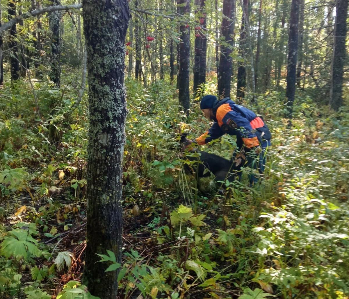 8 и 9 сентября сотрудники МЧС обследовали лесной массив
