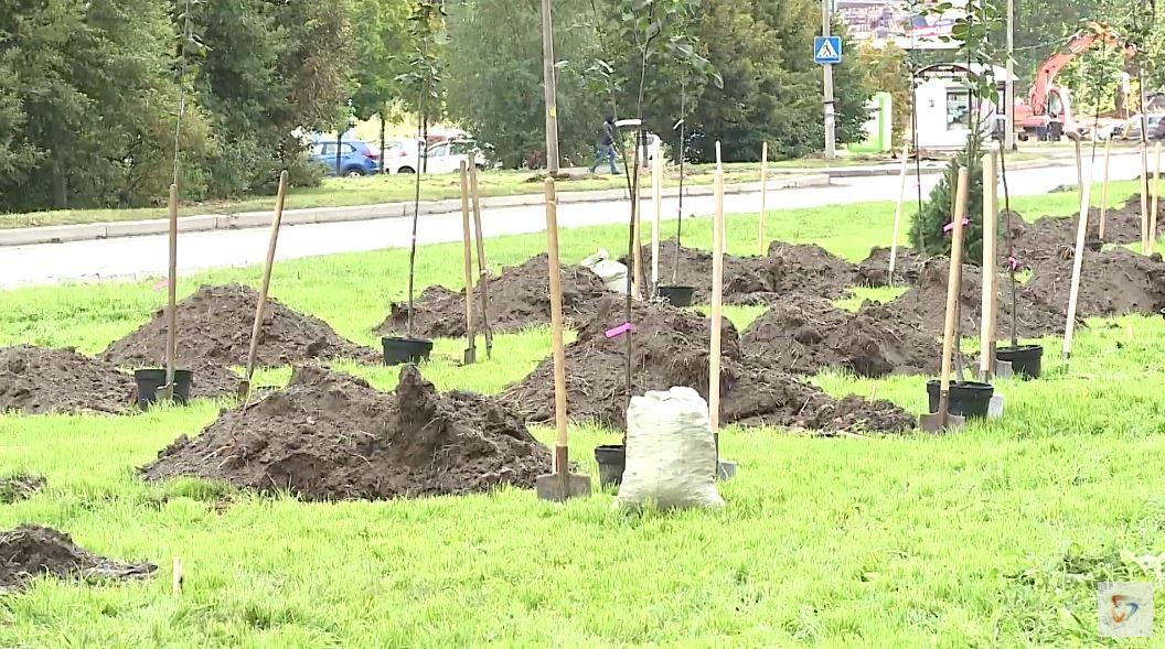 200 деревьев появились на разделительной полосе новой проезжей части