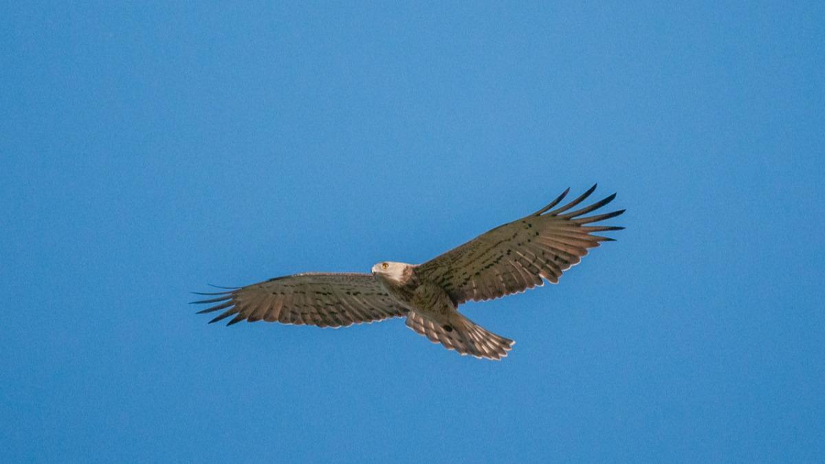 Редкую птицу запечатлели в Череповецком районе