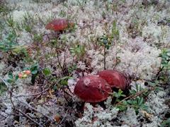 Большинство случаев происходит осенью, когда активно начинают идти грибы
