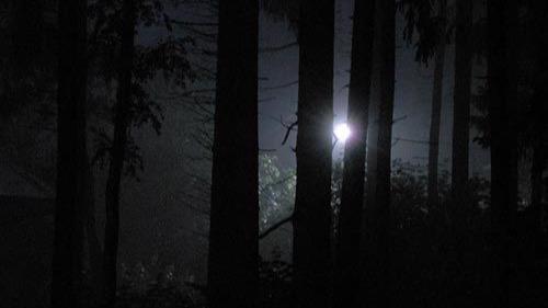 Череповчанка, потерявшаяся в лесу, была дома, пока ее искали экстренные службы