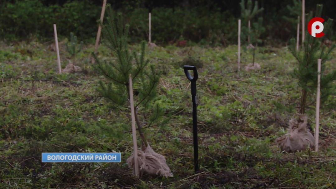Геоглиф в форме ели из 150 деревьев появился под Вологдой
