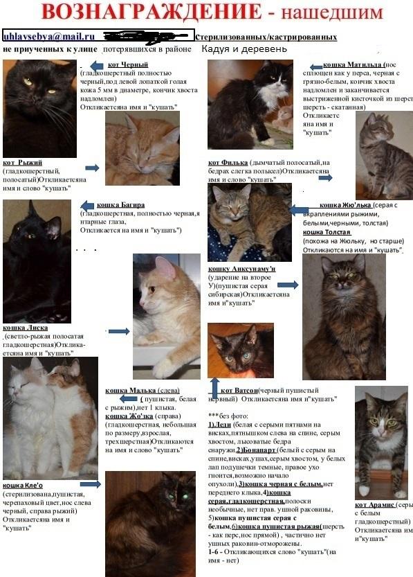 Ольга Иванова расклеила множество листовок, но так и не смогла узнать судьбу своих кошек.