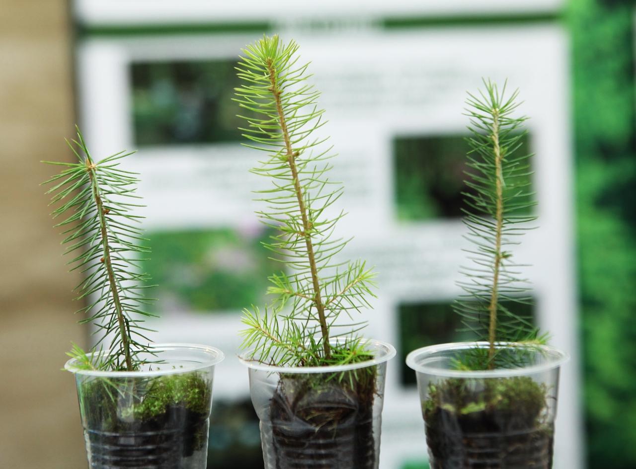Лесовосстановление - одна из задач работников отрасли