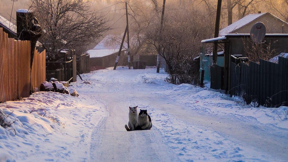 Череповецкие зоозащитники просят жителей не бросать питомцев на дачах