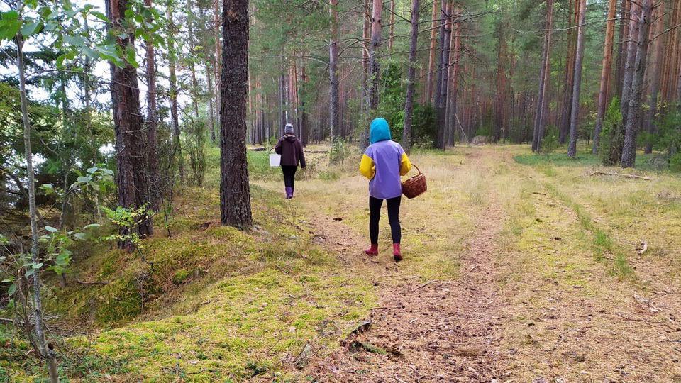 В каких лесах под Череповцом чаще всего теряются люди?