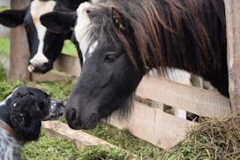 Лошади понравилось в новом доме