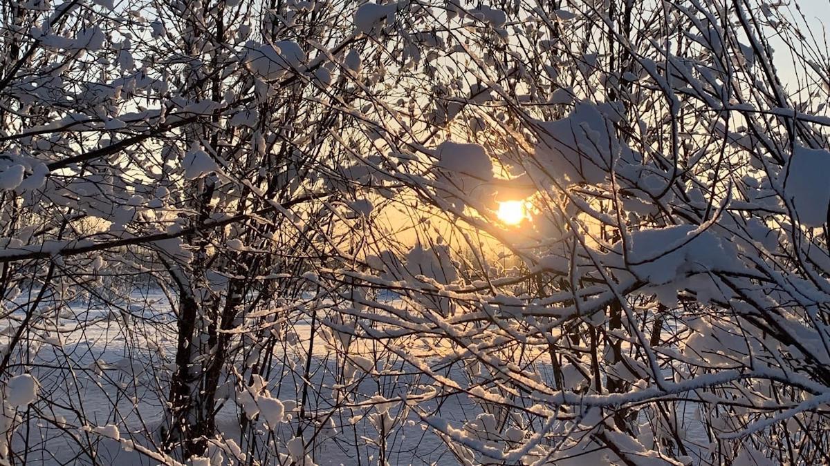 Снега по колено обещают жителям Вологодчины синоптики