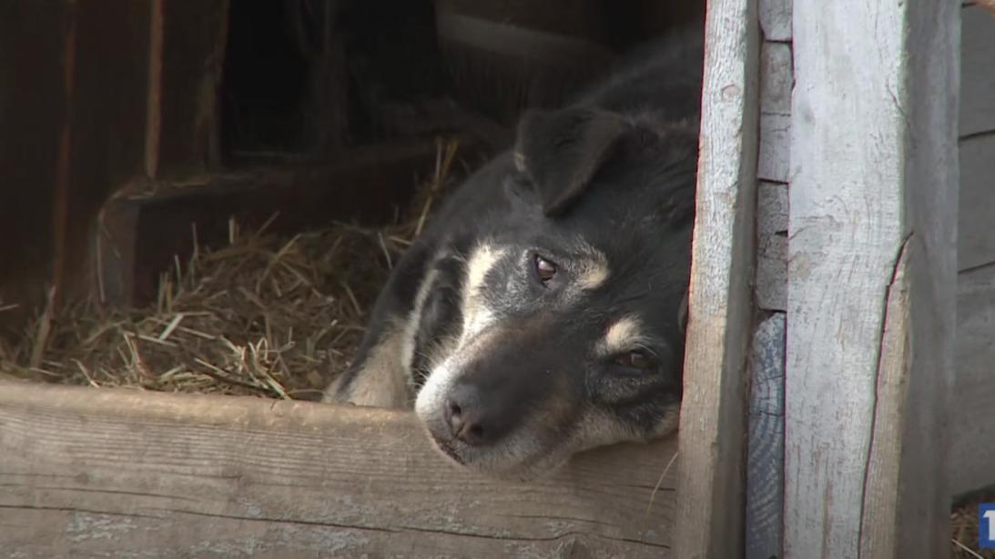 Количество бездомных животных резко увеличилось с приходом холодов в Череповце и районе