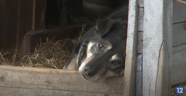 Многие дачники оставляют щенков и котят на улице в деревнях