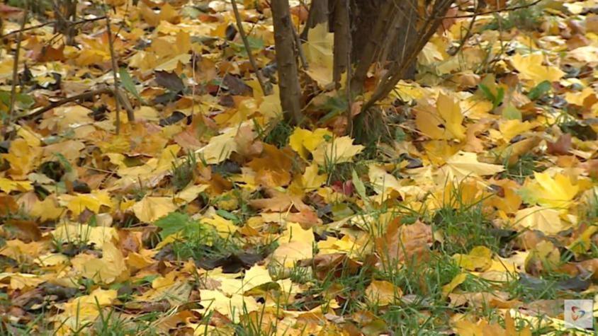 Попрощаться с золотой осенью предлагают синоптики вологжанам