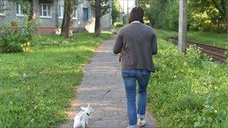 Череповецких владельцев собак «дрессируют» штрафами, приучая кчистоте