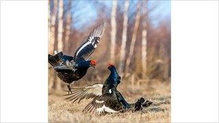 Врегионе началась подготовка квесеннему сезону охоты