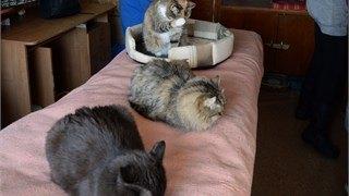 Закладчики мешают волонтерам приютов для животных