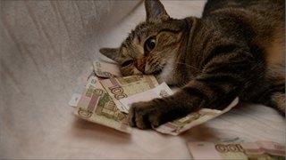 ВВологодской области выявлены поддельные банкноты