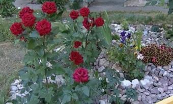 Цветам— праздник