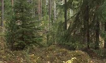 Посещать вологодские леса запретили