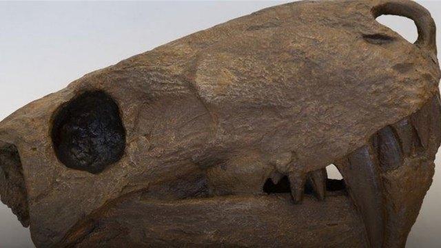 ВСанкт-Петербурге восстановили слепки черепов доисторических ящеров изАрхангельской области