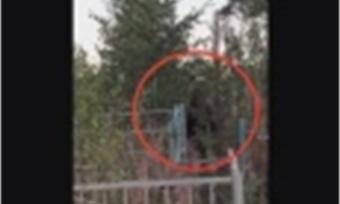 ВМурманской области медведи все чаще стали выходить клюдям