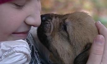 Десятки щенков икотят нашли хозяев навыставке бездомных животных вЧереповце