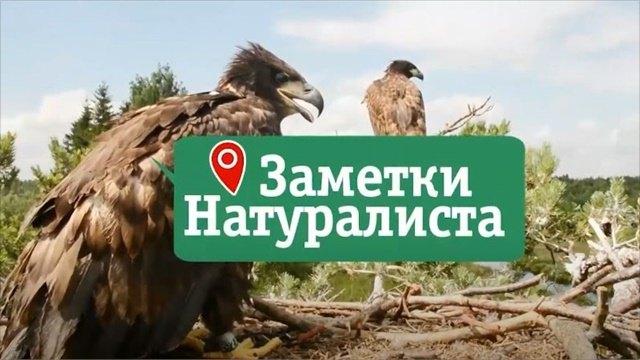 Заметки натуралиста 12.05.20