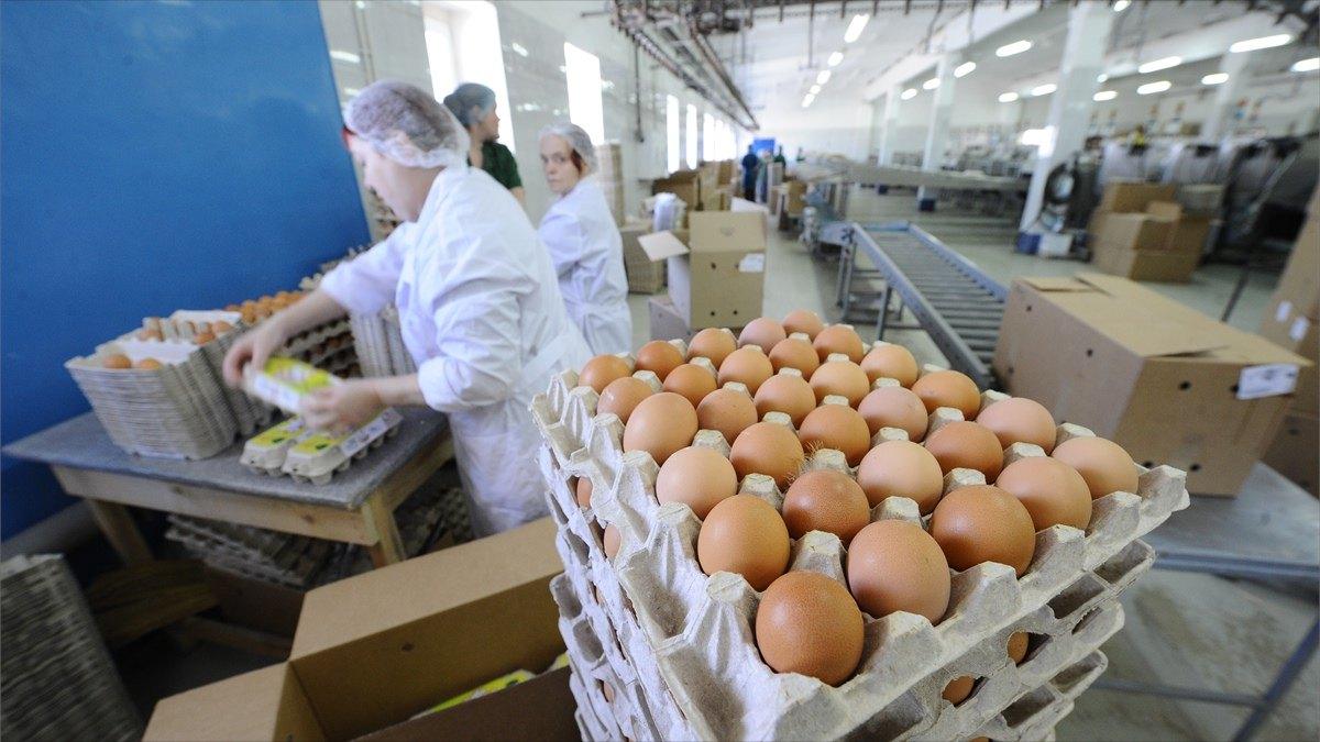 Почему дорожают яйца икурица