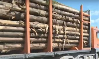 Представители малого исреднего бизнеса могут принять участие ваукционах покупле-продаже древесины