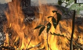 ВКирилловском районе установлен особый противопожарный режим