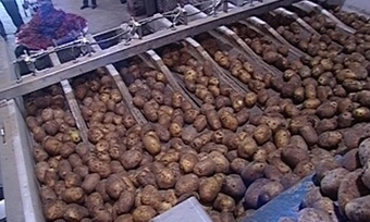 Картофелеводство будут развивать наВологодчине