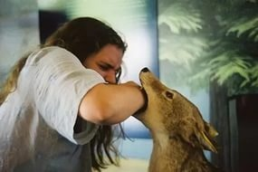 Больше3,5 тысячи вологжан страдают отукусов животных