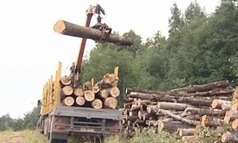 Вколхозе «Правда» незаконно вырубали лес