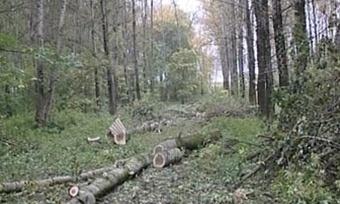 Двухлетнего ребенка ищут влесу Грязовецкого района