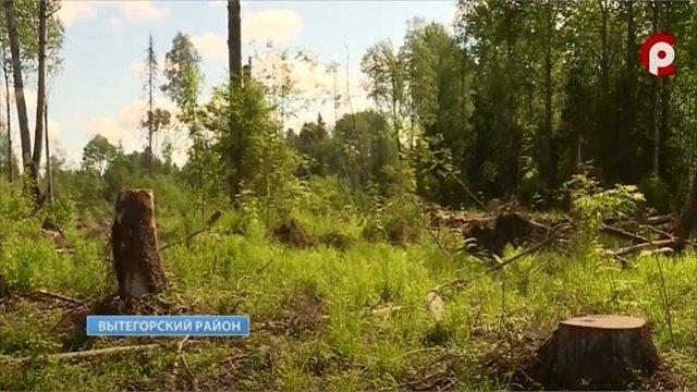 Останки красноармейцев, погибших вбоях, захоронили вОште Вытегорского района