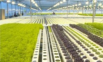 Сельхозпредприятию под Череповцом ограничили подачу газа задолги
