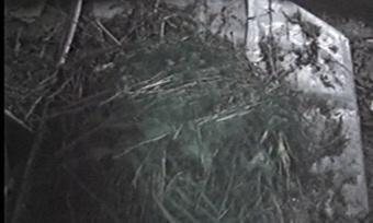 Больше килограмма маковой соломки изъяли вГрязовецком районе