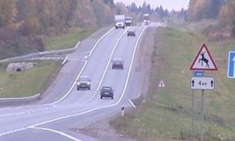 Намагистралях Вологодчины могут появиться ограждения отдиких животных