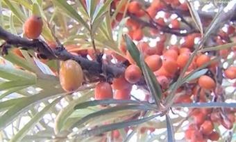 Укого тыква больше, апомидор красней— дачники соревнуются налучший урожай