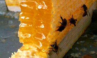 Мёд— всему голова